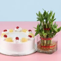 Pineapple Cake and Lucky Bamboo